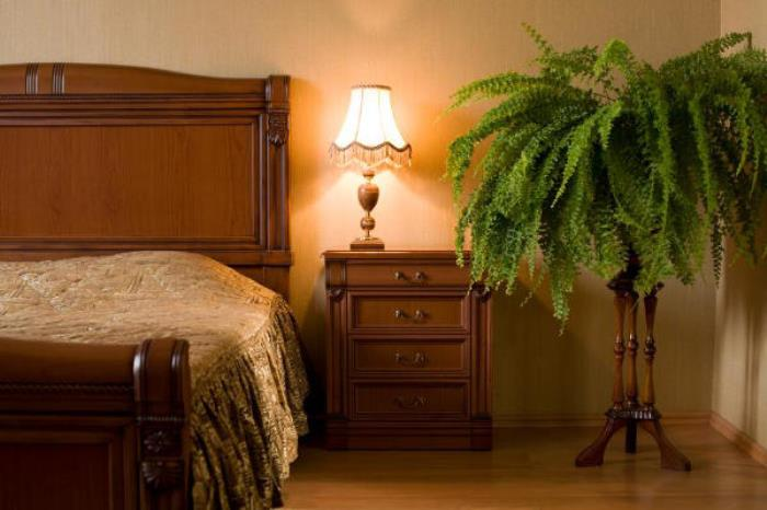 153359-849x565-plants-in-bedroom